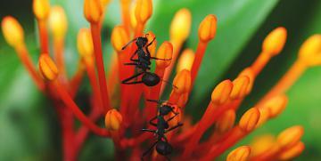 :: Dicas – Controle de Formigas